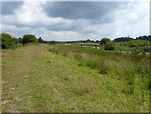 TQ0215 : Canal bank separating the old Wey Arun Canal from Waltham Brooks Nature Reserve by Dave Spicer
