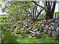 NG3834 : Foxgloves, trees and a tumbled wall by Richard Dorrell