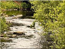 SD9701 : River Tame by David Dixon