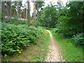 SU8142 : Path in Alice Holt Forest by Sandy B