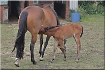 SE2425 : Mare and Foal by Richard Kay