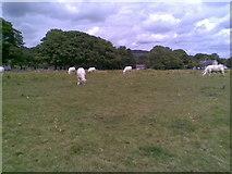 SK1971 : Farmland near Great Longstone by Burgess Von Thunen