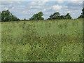 TL0952 : Oilseed rape at Renhold by M J Richardson