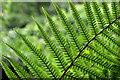 J4477 : Ferns, Cairn Wood, Craigantlet (1) by Albert Bridge