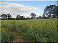 SO6489 : On a footpath through a field of Oilseed Rape by Row17