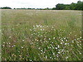 SU2140 : Winterbourne Downs RSPB Nature Reserve by Maigheach-gheal
