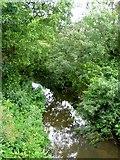SY4797 : River Brit by Nigel Mykura