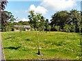 SJ9595 : Orchard Garden by Gerald England