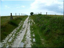 TQ2010 : Restricted byway reaching the top of Windmill Hill by Shazz