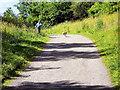 NZ1961 : Derwent Walk Country Park and Derwenthaugh Park by David Dixon