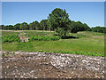 TG0837 : View towards Lowes Plantation, Holt Lowes by Evelyn Simak