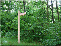 NY2824 : Signpost in Brundholme Wood by Stephen Craven