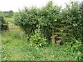 SO4308 : If only I'd brought the secateurs by Ian Paterson