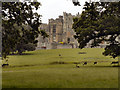 NZ1321 : Deer Grazing on Raby Castle Estate by David Dixon