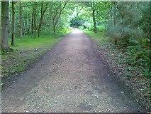 TQ2372 : Pathway, Putney Heath by Alex McGregor
