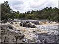 NY9027 : River Tees, Low Force by David Dixon