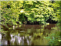 NZ0615 : River Tees by David Dixon