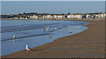 SY6879 : Weymouth beach at sunrise by sue hogben