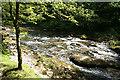SX4870 : Whitchurch: river Walkham by Martin Bodman