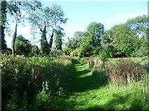 TQ4667 : Path in Riverside Gardens, St Mary Cray by Marathon