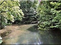 SU4828 : River Itchen - Winchester by Paul Gillett