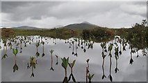 NC8842 : Bogbean reflections in the Dubh Lochan, Forsinard RSPB Reserve by Greg Fitchett