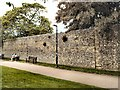 SU4829 : City Wall - Winchester by Paul Gillett
