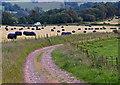 NS9999 : Track near Blairhill by William Starkey