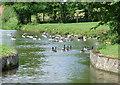 SJ9353 : Site of  canal bridge near Endon Bank, Staffordshire by Roger  Kidd