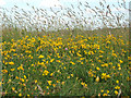 TQ3896 : Flowers and Grasses, Yate's Meadow by Roger Jones