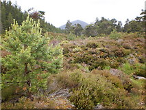 NH9305 : Carn Eilrig seen from the Rothiemurchus Forest by Peter S