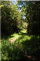 SS9444 : Footpath, Wootton Common by Christopher Hilton