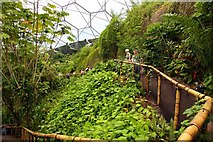 SX0455 : Pathway at the top of the Rainforest Biome by Steve Daniels