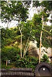 SX0455 : Rubber trees in the Rainforest Biome by Steve Daniels