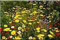 SX0454 : Mediterranean wildflowers in the Biome by Steve Daniels