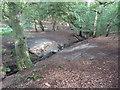 TQ4398 : Stream in Birch Wood by Roger Jones