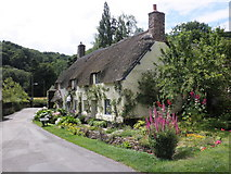 SS9843 : Thatched cottage in Park Street, Dunster by Roger Cornfoot