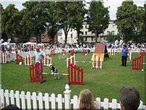 SP3165 : Doggie event, Pump Room Gardens by Robin Stott