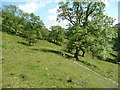 SD9673 : Cross Wood, Kettlewell by Humphrey Bolton