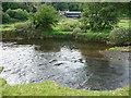SN0718 : The Eastern Cleddau and Dan-y-coed farm by Jeremy Bolwell
