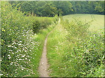 TQ2152 : South of Dawcombe Wood by Colin Smith
