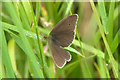NO2243 : Ringlet (Aphantopus hyperantus), near Coupar Grange by Mike Pennington