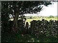 SD3783 : Stile in wall near Thompson Wood by Raymond Knapman