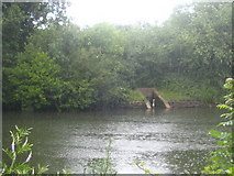 TQ0866 : A heron in pouring rain on Desborough Island by Rod Allday