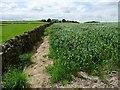 SE0835 : Public footpath at field edge by Christine Johnstone