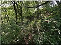 SD7317 : Woodland Path above Wheatsheaf Brook by David Dixon
