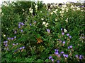 NY9424 : Roadside verge on minor road to Holwick by Andrew Curtis