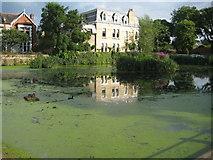 TQ1977 : Kew Pond by Nigel Cox