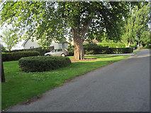 TF3093 : Church Lane looking East by John Firth
