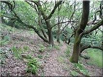 SE0025 : Hebden Royd Footpath 68 in Brock Holes Wood, Mytholmroyd by Humphrey Bolton